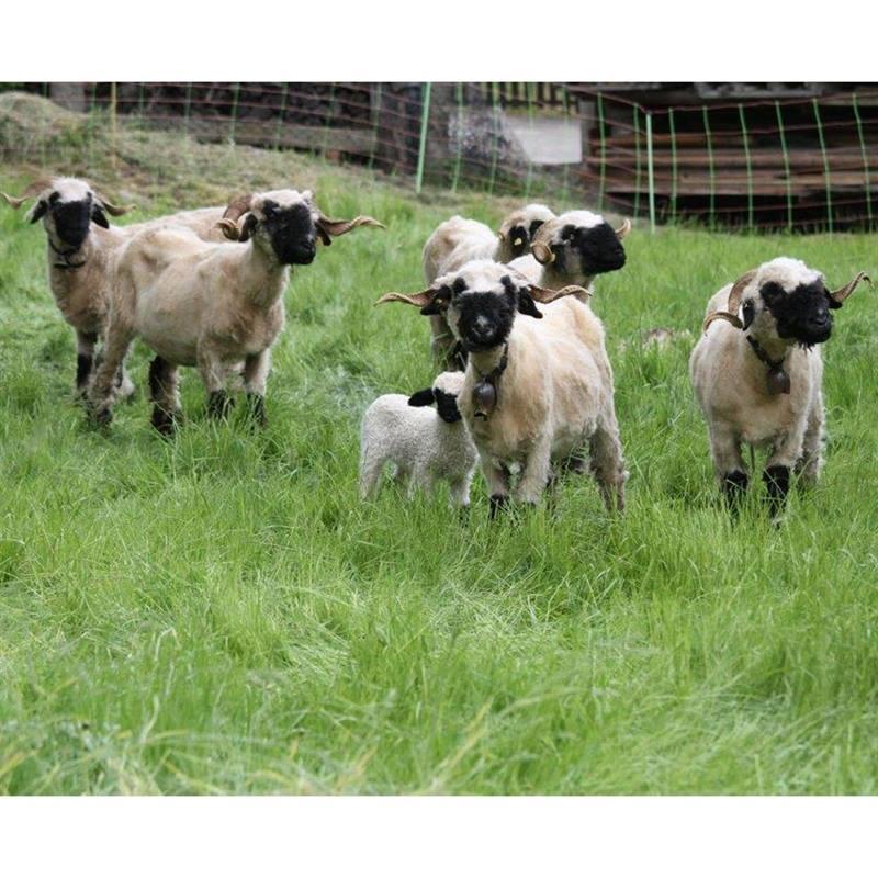 27193-50m-voss-farming-sheep-netting-euronet-90cm-2-spikes-5.jpg