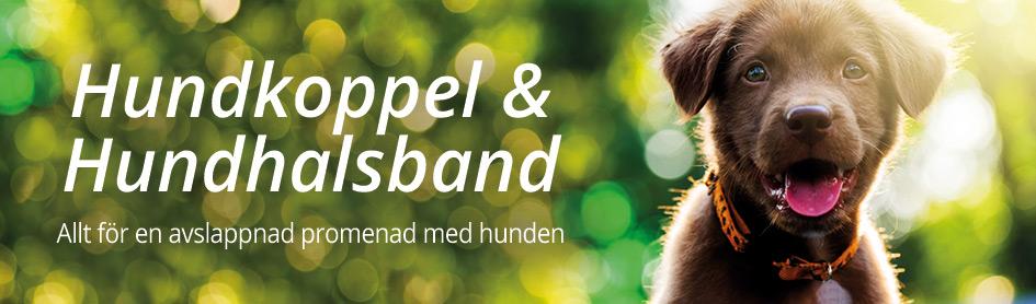Hundhalsband & Koppel
